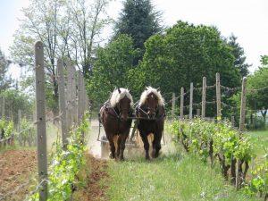 castello di tassarolo vigna cavalli
